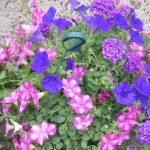 bloemen 119