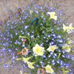 bloemen 122