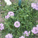 bloemen 132