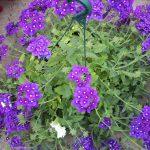 bloemen 134